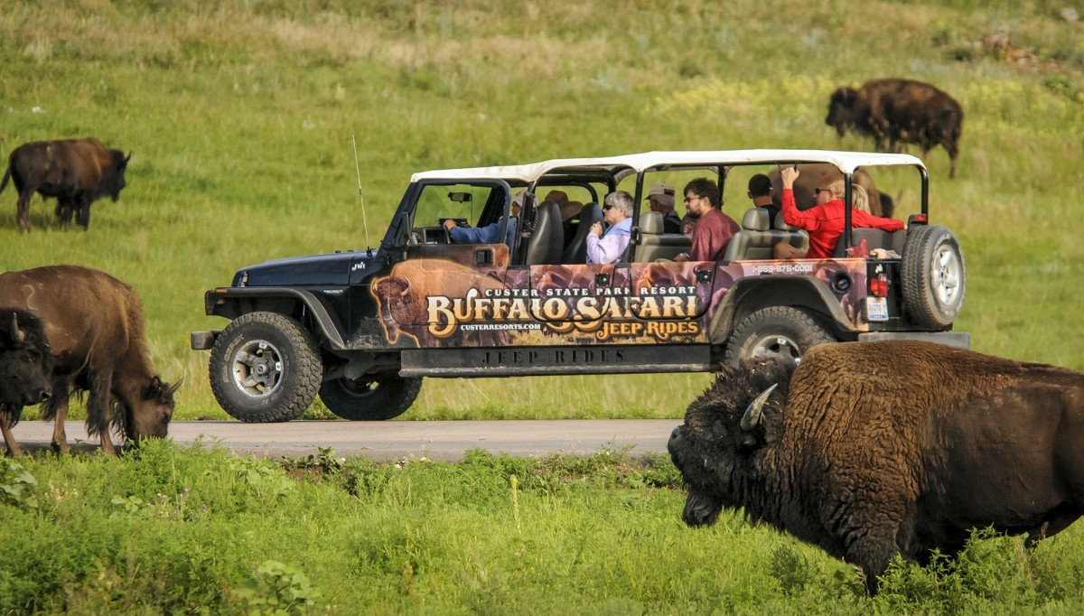 Buffalo Safari Jeep Ride