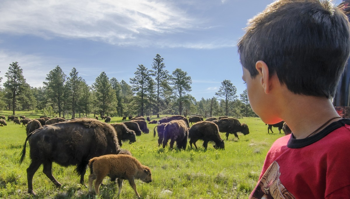 Young boy up close to buffalo.